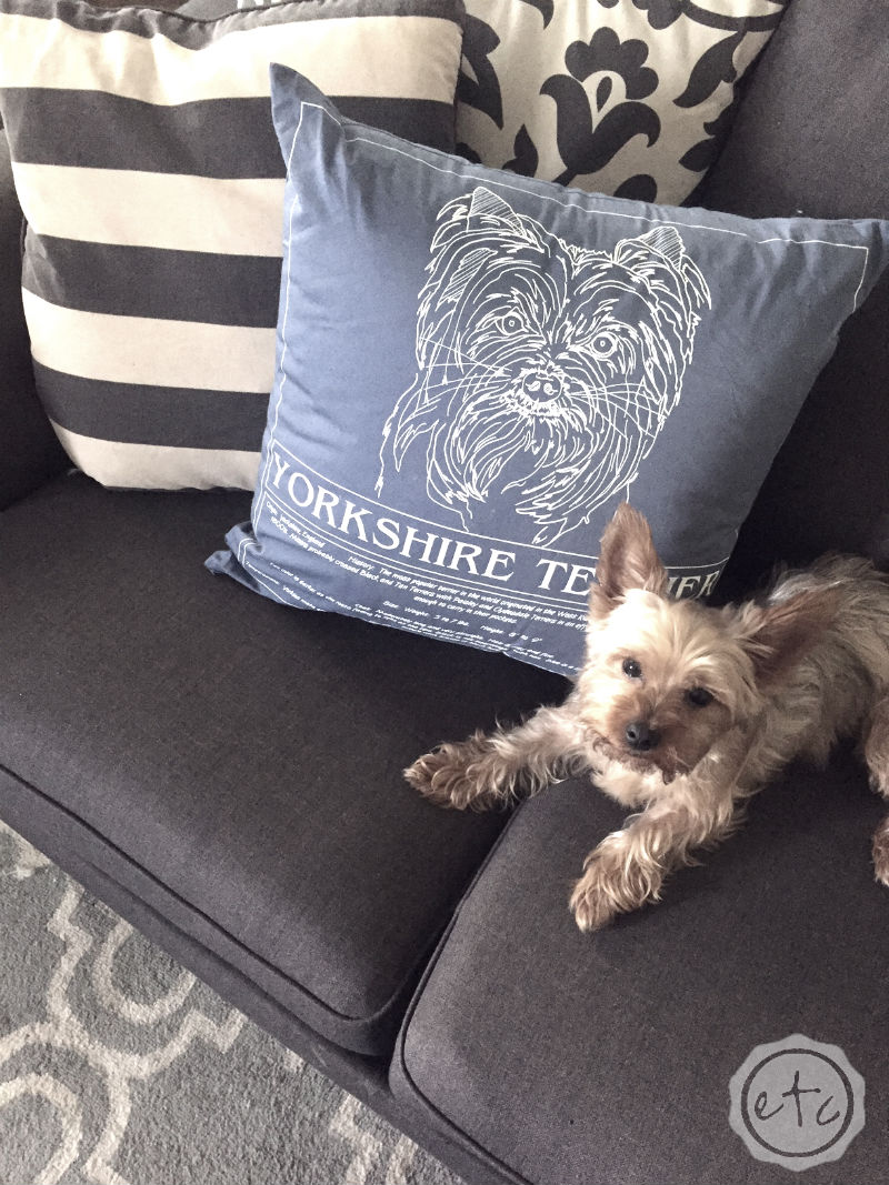 How cute is this little yorkie pillow? Find any blueprint puppy you like!