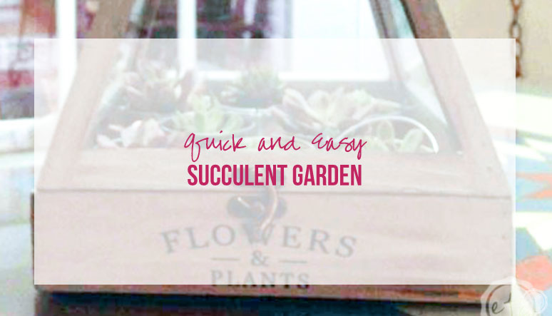 Quick and Easy Succulent Garden