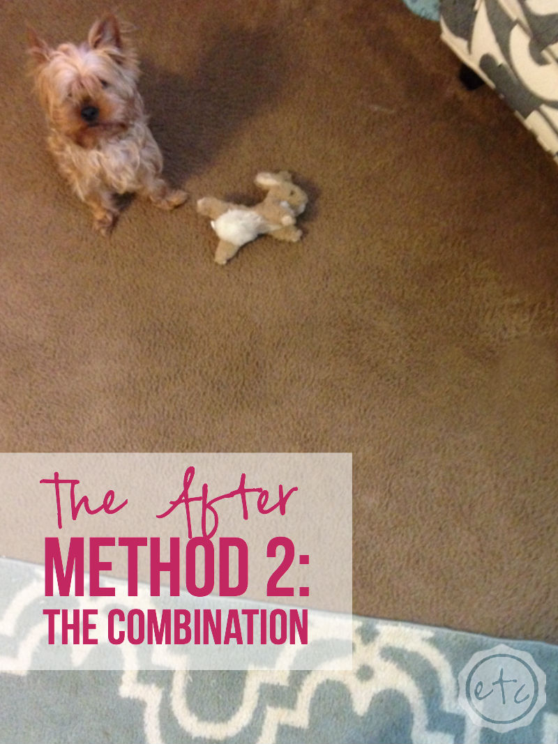 How To Clean Pet Stains Out Of Carpet With Bis Which Method