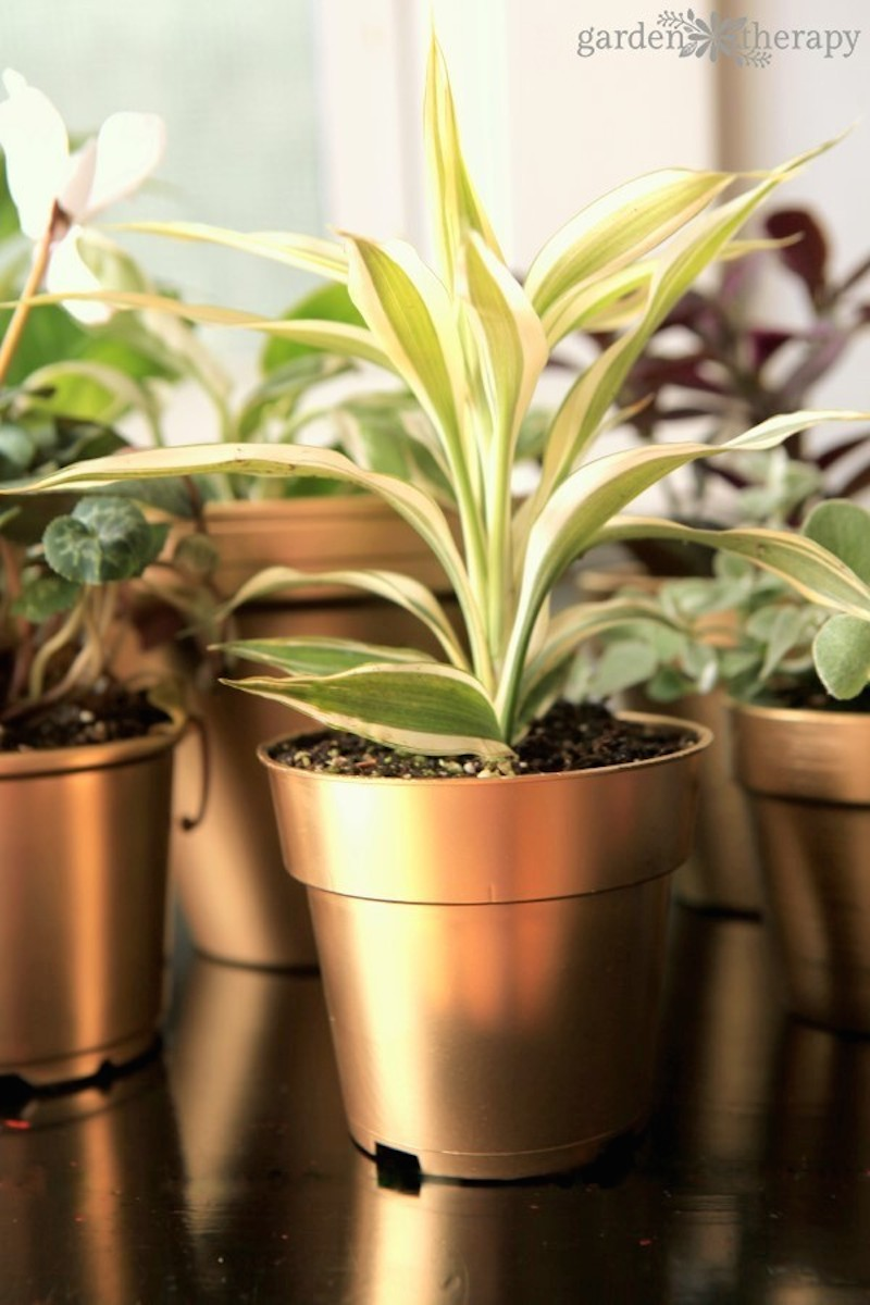9 how-to-get-brilliant-shine-on-these-diy-gold-painted-pots-a5