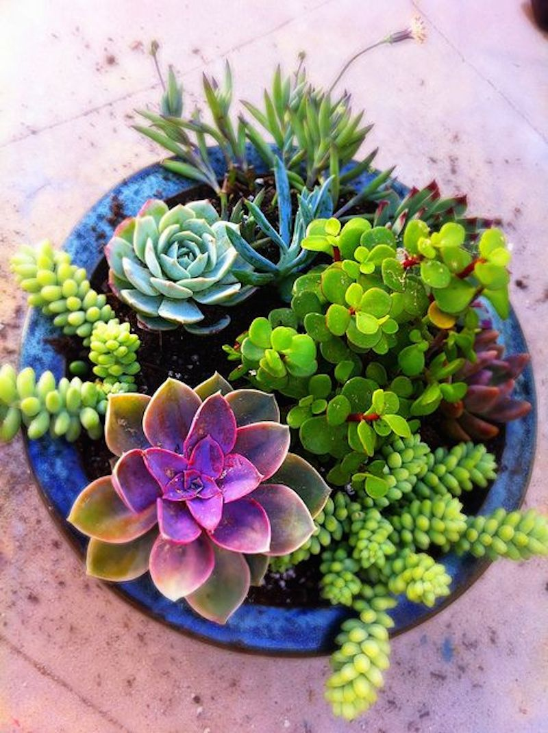 3 Summer-Gardening-How-to-Propagate-Succulents