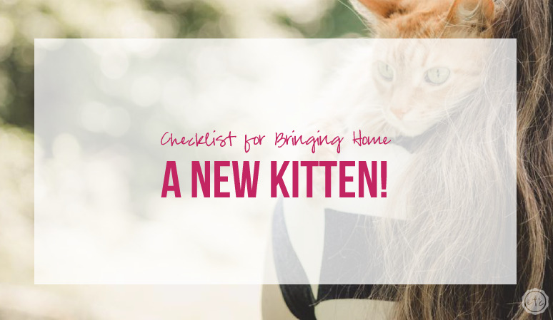 Checklist for Bringing Home a New Kitten