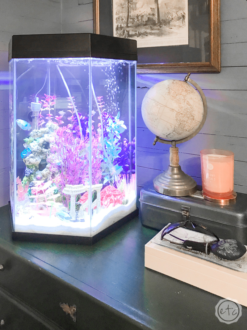 20 Gallon Fish Tank Decorative in Room