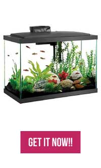 20 Gallon Fish Tank Starter Kit on Amazon, BUY IT NOW