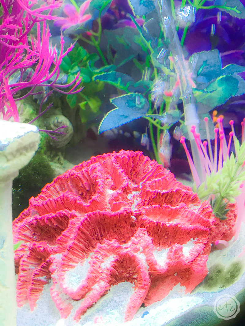 20 Gallon Fish Tank Small Coral Bubbler