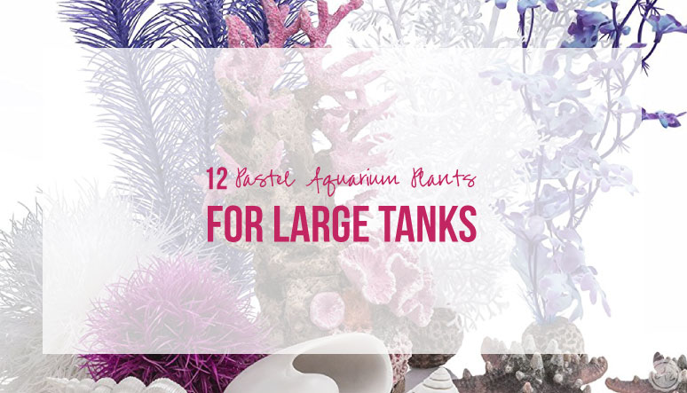 12 Pastel Aquarium Plants for Large Tanks
