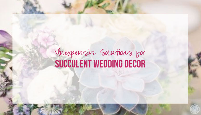 Inexpensive Solutions for Succulent Wedding Decor