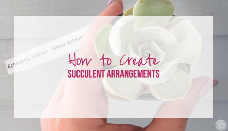 How to Create Easy Succulent Arrangements