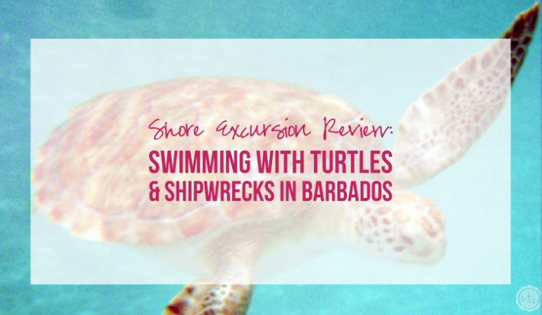 Shore Excursion Review: Swimming with Turtles & Shipwrecks in Barbados
