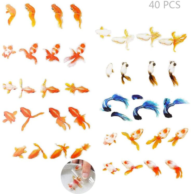 Goldfish Koi Film