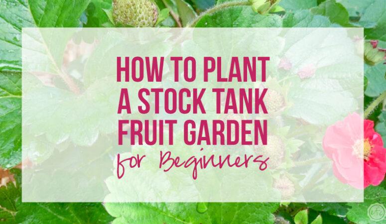 How to Plant an Easy Beginner Stock Tank Fruit Garden